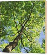 Summer Tree Canopy Wood Print