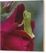 Green Tree Frog And Red Roses Wood Print