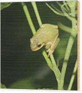 Green Tree Frog On Hibiscus Wood Print