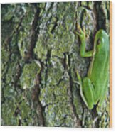 Green Tree Frog On Lichen Covered Bark Wood Print