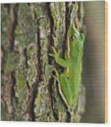 Green Tree Frog Thinking Wood Print