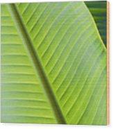 Green Tropical Leaves Wood Print