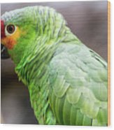 Green Tropical Parrot, Side View. Wood Print