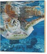 Green Turtle Wood Print by Alexis Rosenfeld