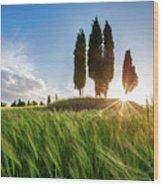 Green Tuscany Wood Print