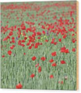 Green Wheat And Red Poppy Flowers Field Wood Print