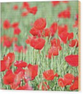 Green Wheat And Red Poppy Flowers Wood Print