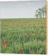 Green Wheat Field Spring Scene Wood Print