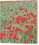 Green Wheat With Poppy Flowers Wood Print
