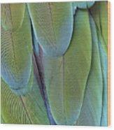 Green-winged Macaw #4 Wood Print