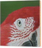 Green-winged Macaw Close Up Wood Print
