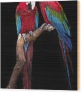 Green Winged Macaw Portrait Wood Print