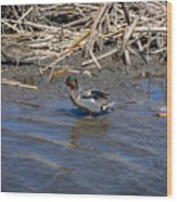 Green-winged Teal 7 Wood Print