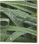 Green With Rain Drops Wood Print