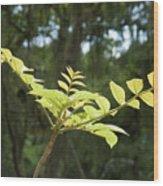 Green Y Wood Print