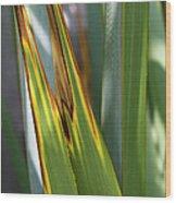 Green Yellow Brown  Wood Print