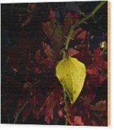 Greenbriar Leaf In Evening Sun Wood Print