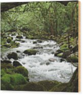 Greenbrier River Scene 2 Wood Print
