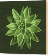 Greenery Succulent Echeveria Agavoides Flower Wood Print