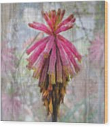 Greenhouse On A Rainy Day Wood Print