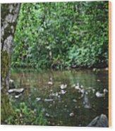 Greenwood Creek Wood Print