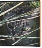 Greeting Card - Joe Joe In The Grass Wood Print