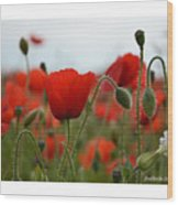Greeting Card - Poppies In France Wood Print