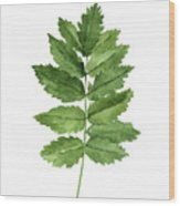 Gren Fern, Forest Plant Home Garden, Minimalist Abstract Poster Wood Print
