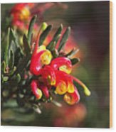 Grevillea Ground Cover Wood Print