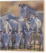 Grevy Zebra Party  7528 Wood Print