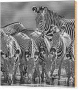 Grevy Zebra Party  7528bw Wood Print