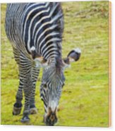Grevys Zebra Left Wood Print