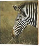 Grevy's Zebra Wood Print