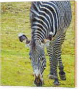 Grevys Zebra Right Wood Print