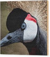 Grey - Crowned Crane Wood Print