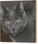 Grey Cat With Yellow Eyes Wood Print