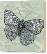 Grey Cracker Butterfly Wood Print