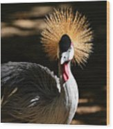 Grey Crowned Crane Wood Print
