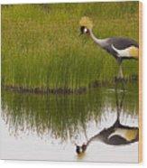 Grey Crowned Crane - Signed Wood Print
