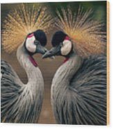 Grey Crowned Cranes Of Africa Wood Print