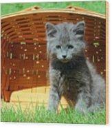 Grey Fluffy Kitten In Market Basket Wood Print