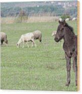 Grey Foal On Pasture Farm Scene Wood Print