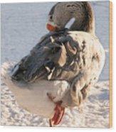 Grey Goose Grooming Wood Print