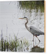 Grey Heron #3 Wood Print