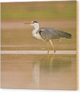 Grey Heron Ardea Cinerea Wood Print