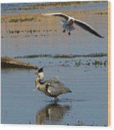 Grey Heron Being Mobbed Wood Print
