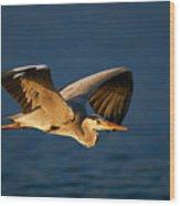 Grey Heron In Flight Wood Print by Johan Swanepoel