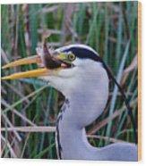 Grey Heron With Fish Wood Print