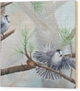 Grey Jays In A Jack Pine Wood Print