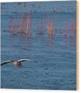 Grey Lag Goose In Flight Wood Print